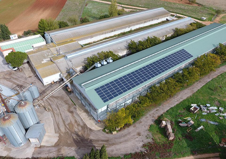 Instalación solar fotovoltaica de autoconsumo en industria agropecuaria avícola en Villarejo de Salvanés
